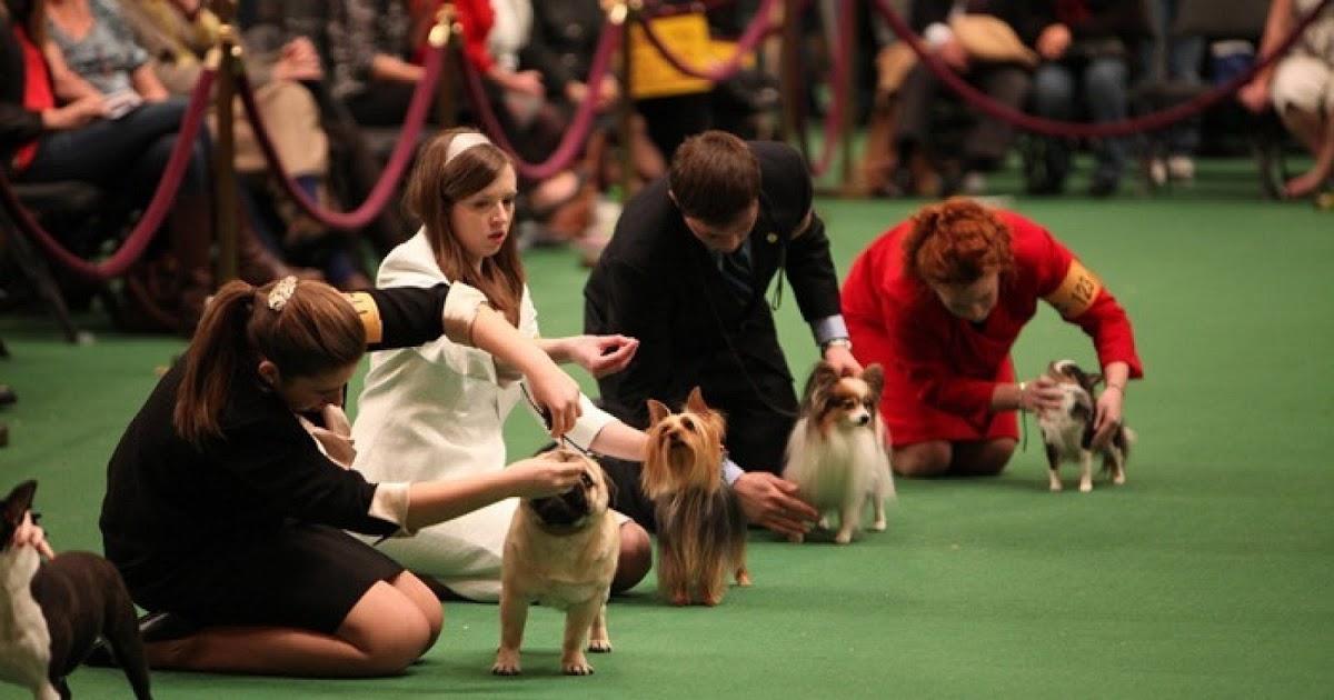 Дрессировка маленьких собак
