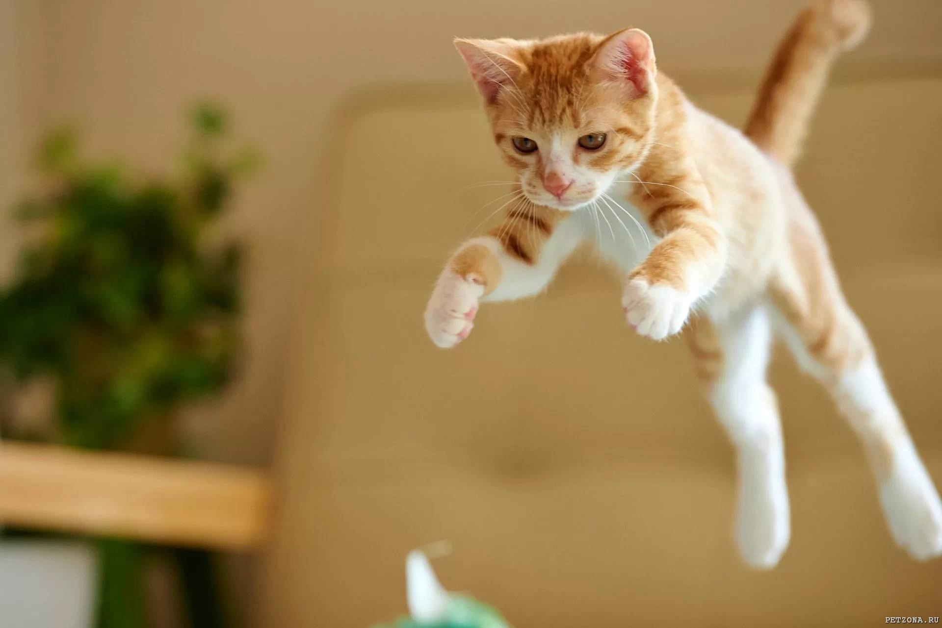 Необычный день из жизни кота 😸