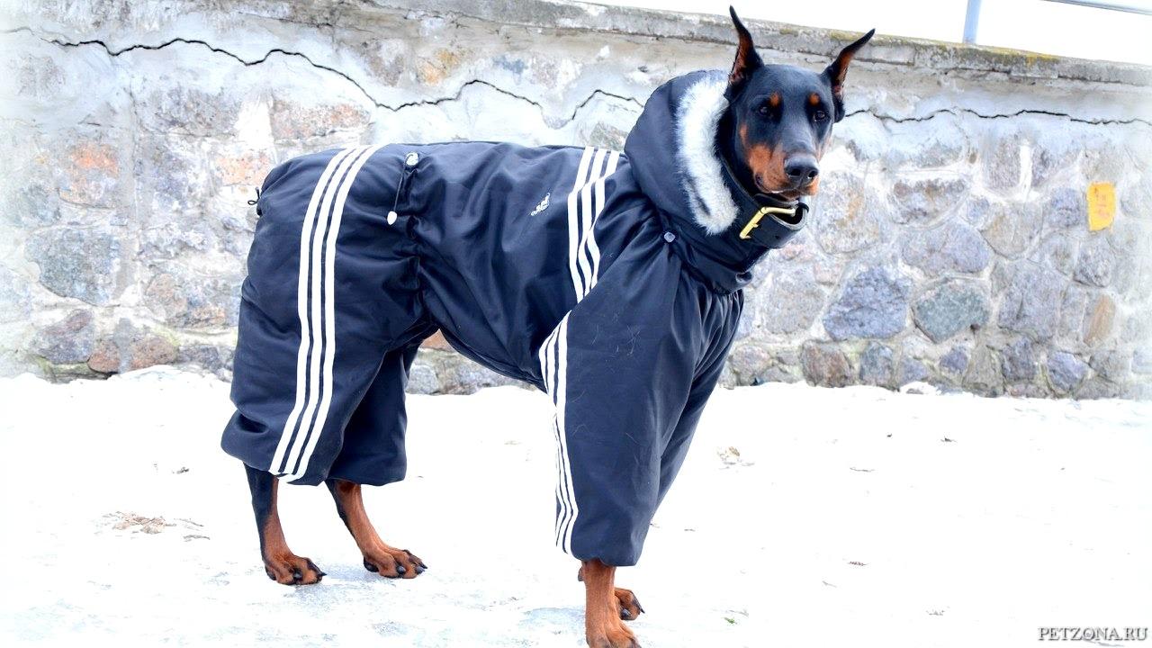 Подбираем одежду для собаки