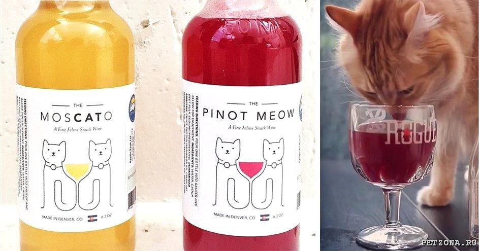 Вино для котов - новое лакомство пушистых.