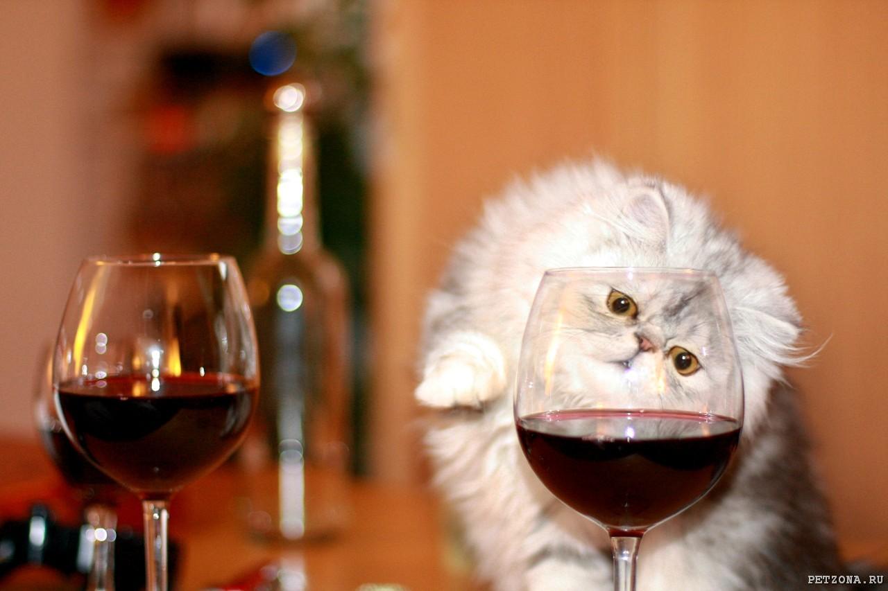 Прикольные картинки с вином, смешные картинки поздравление