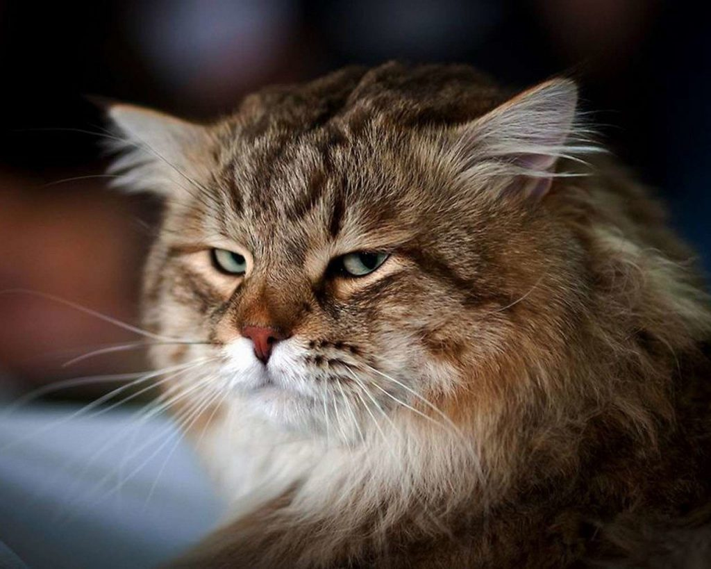 Кошачьи повадки