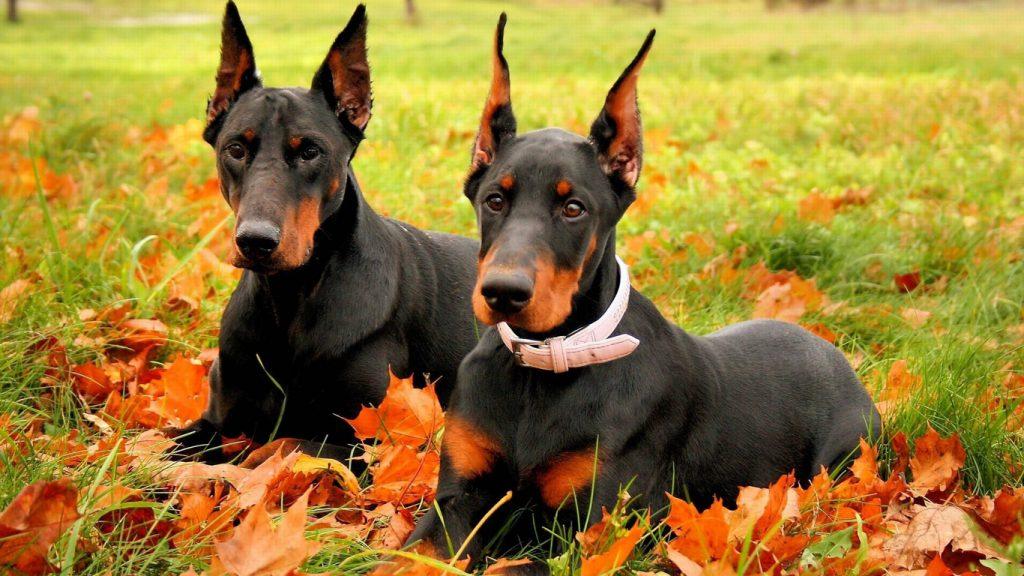 Назначение пород собак