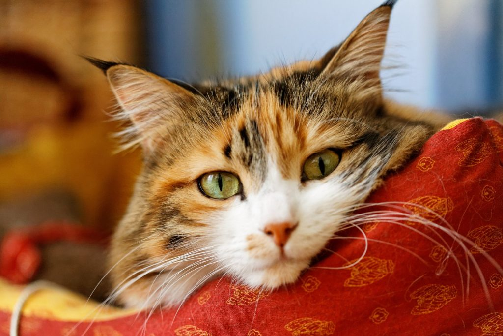 Органы чувств кошек