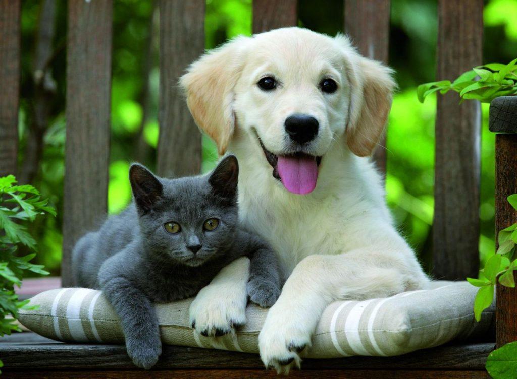 был следователем картинки с собаками и кошками красивые породистые высоко летать постоянно