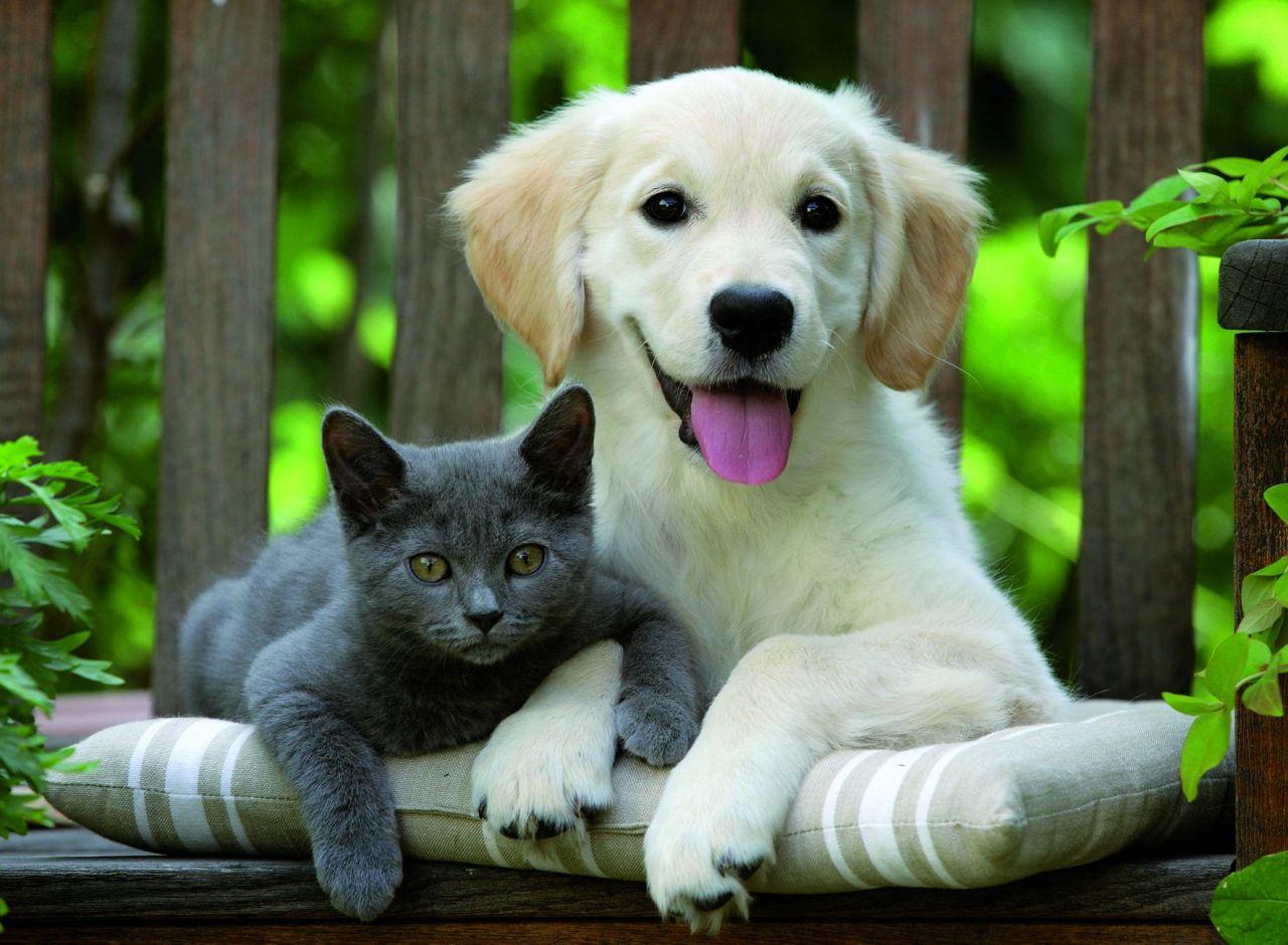 Картинки собаки кошки, ссср