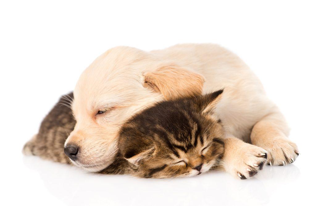 Дружба и мир между кошкой с собакой