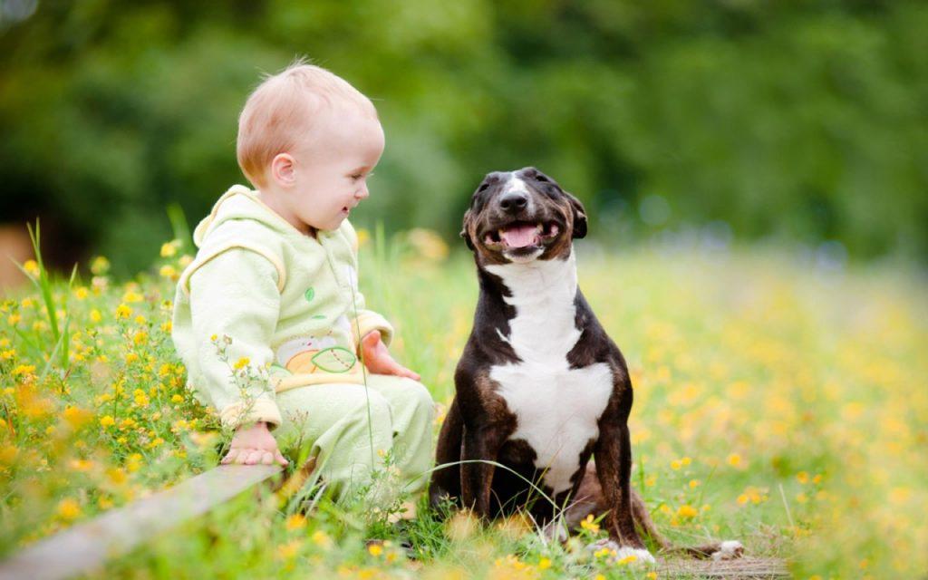 Какую собаку завести для ребенка?