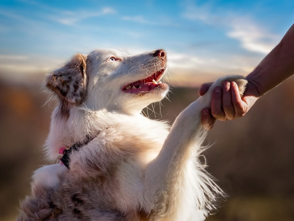 Магические способности собак
