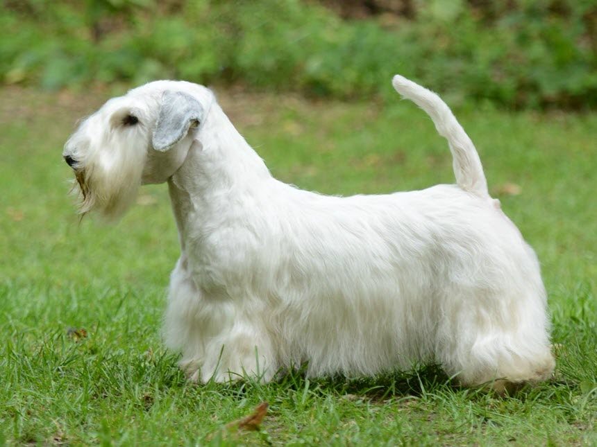 Силихем – собака для активных людей