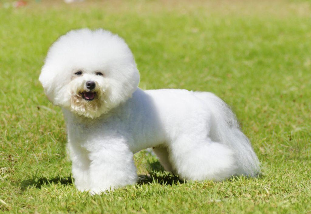 Названы идеальные собаки для аллергиков
