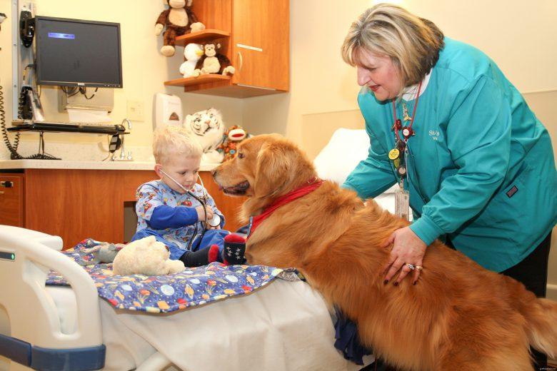 Домашние животные приходят на помощь, или пет-терапия