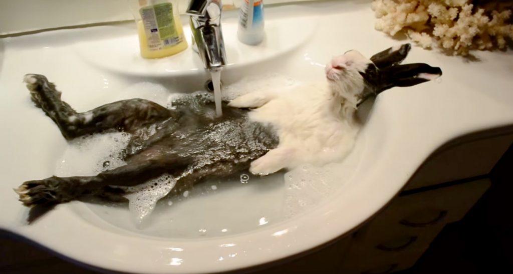 Любовь зверей к купанию