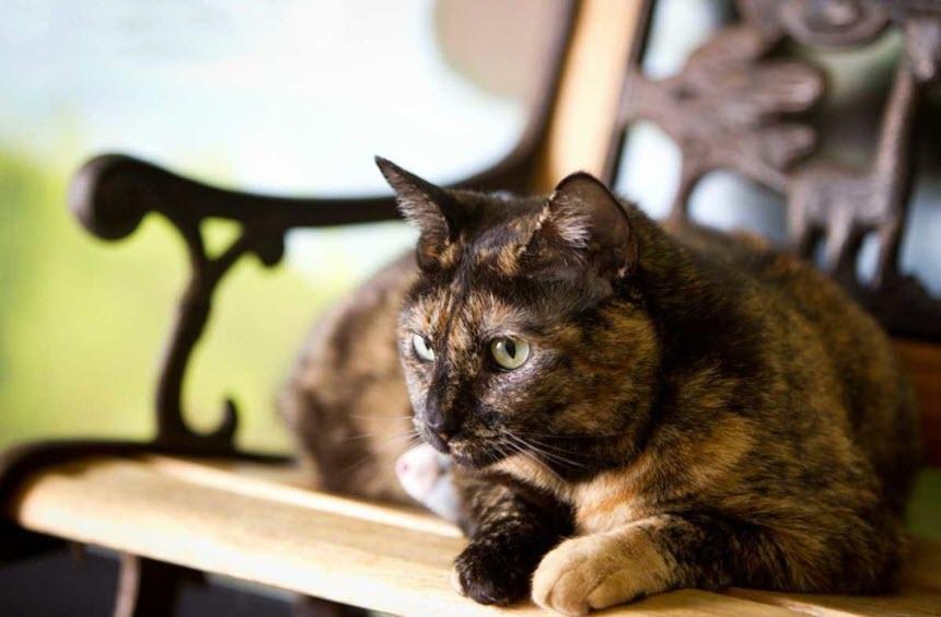 Некоторые особенности ухода за старыми кошками