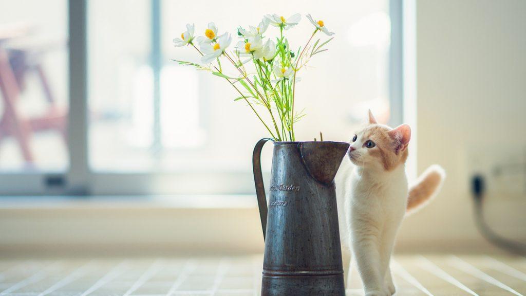 Кошка не ходит в лоток. Что делать?