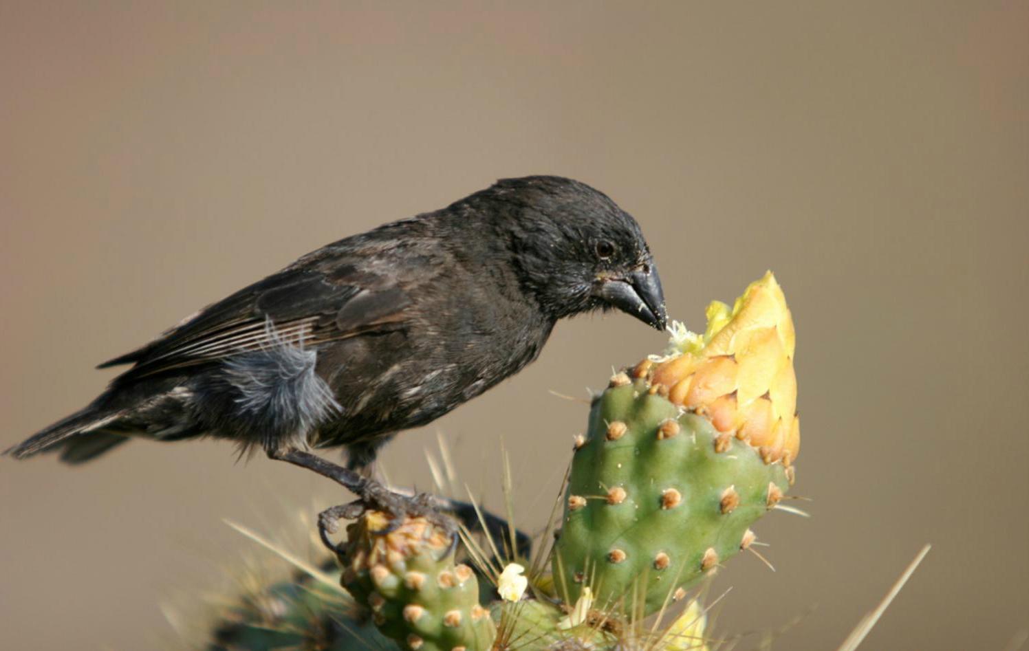 Какие птицы умеют использовать орудия