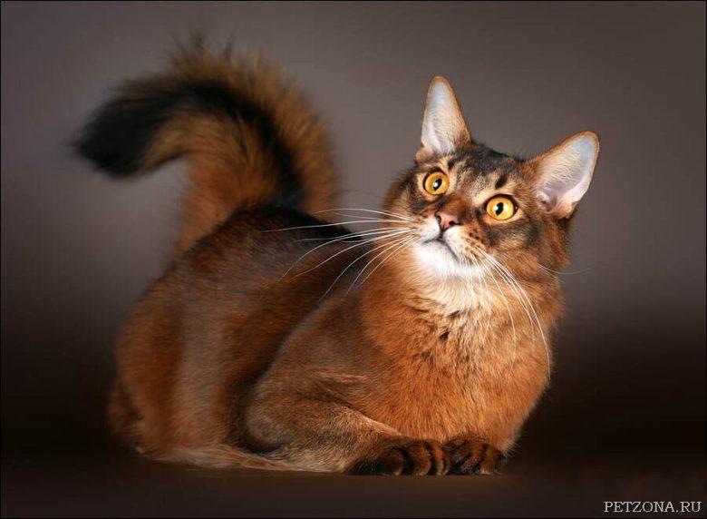 Солнечная кошка сидела у окошка...
