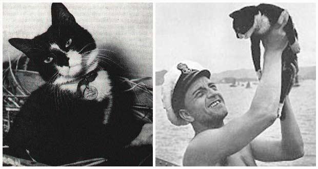 Топ-12 самых знаменитых в мире кошек
