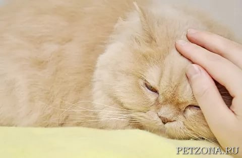 Всем ли породам кошек необходим уход?