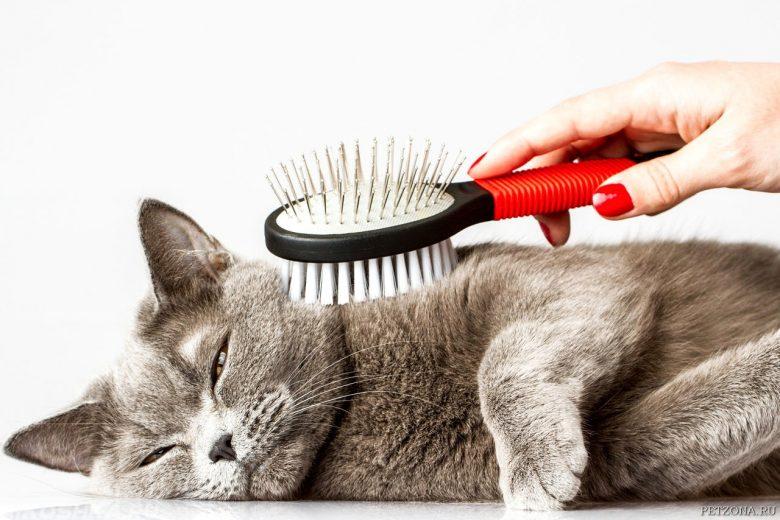 лировидный расчесывать кошку картинки применяют внутрь