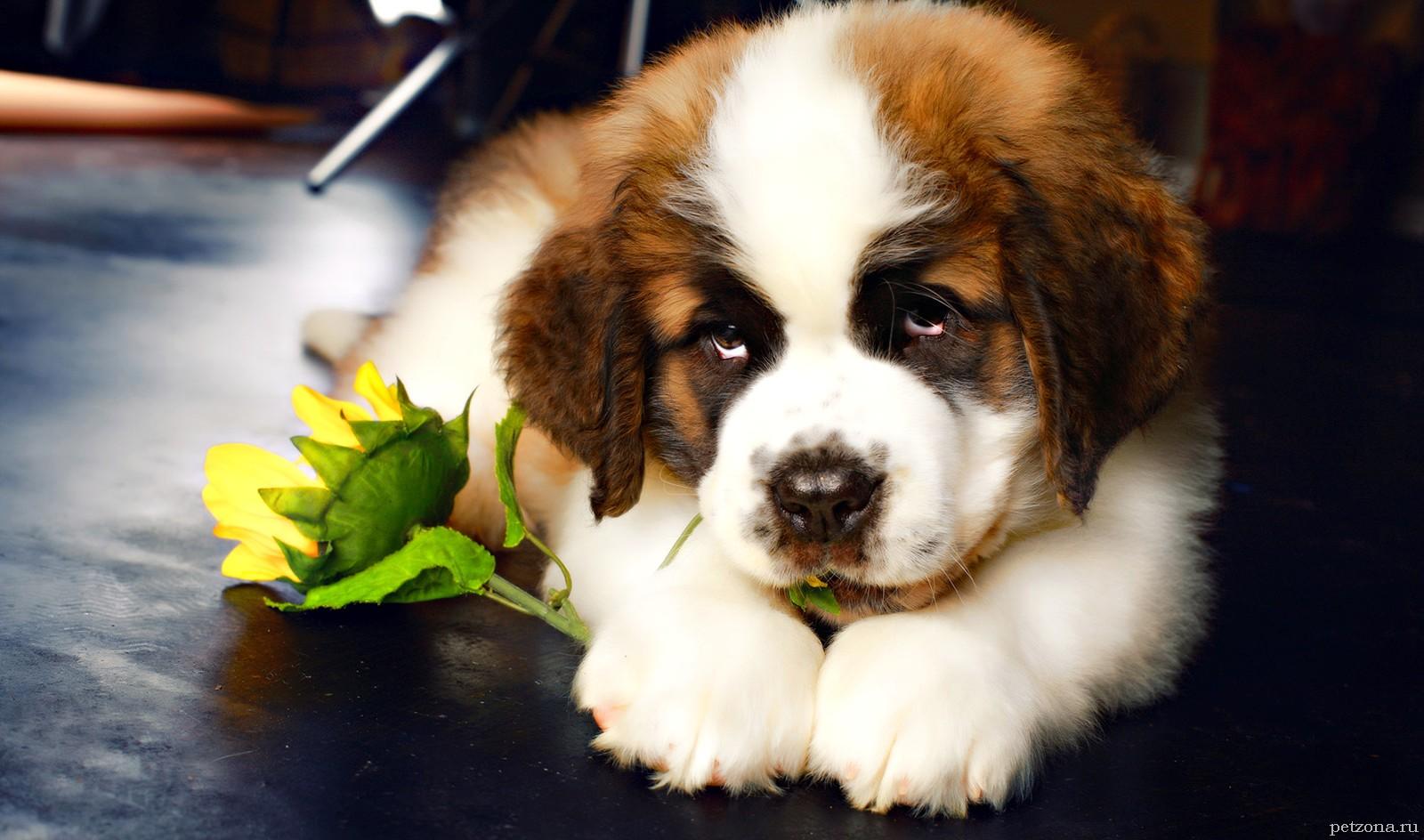 4 породы собак для спокойных людей