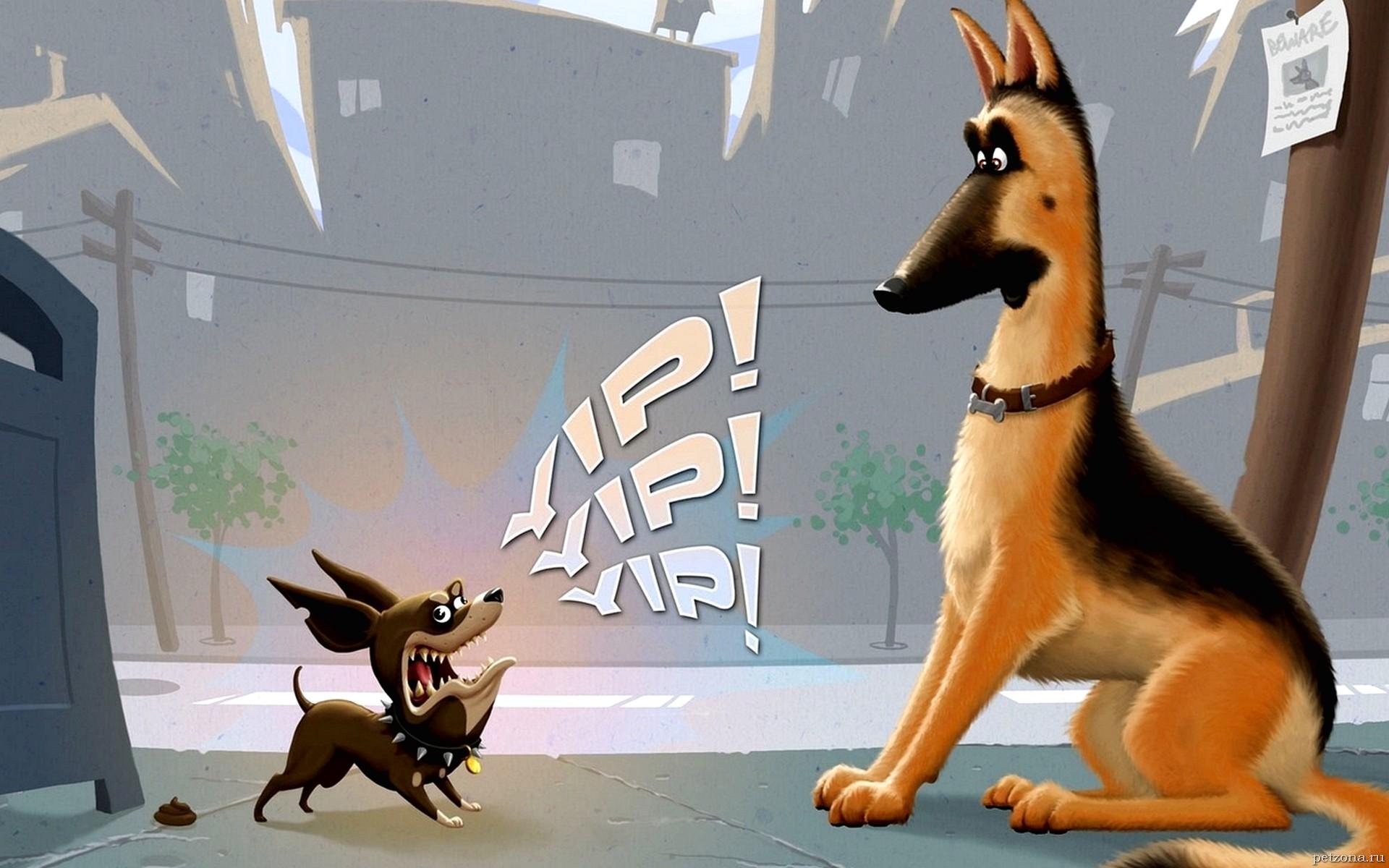 🐩 Что делать, если собака много лает?