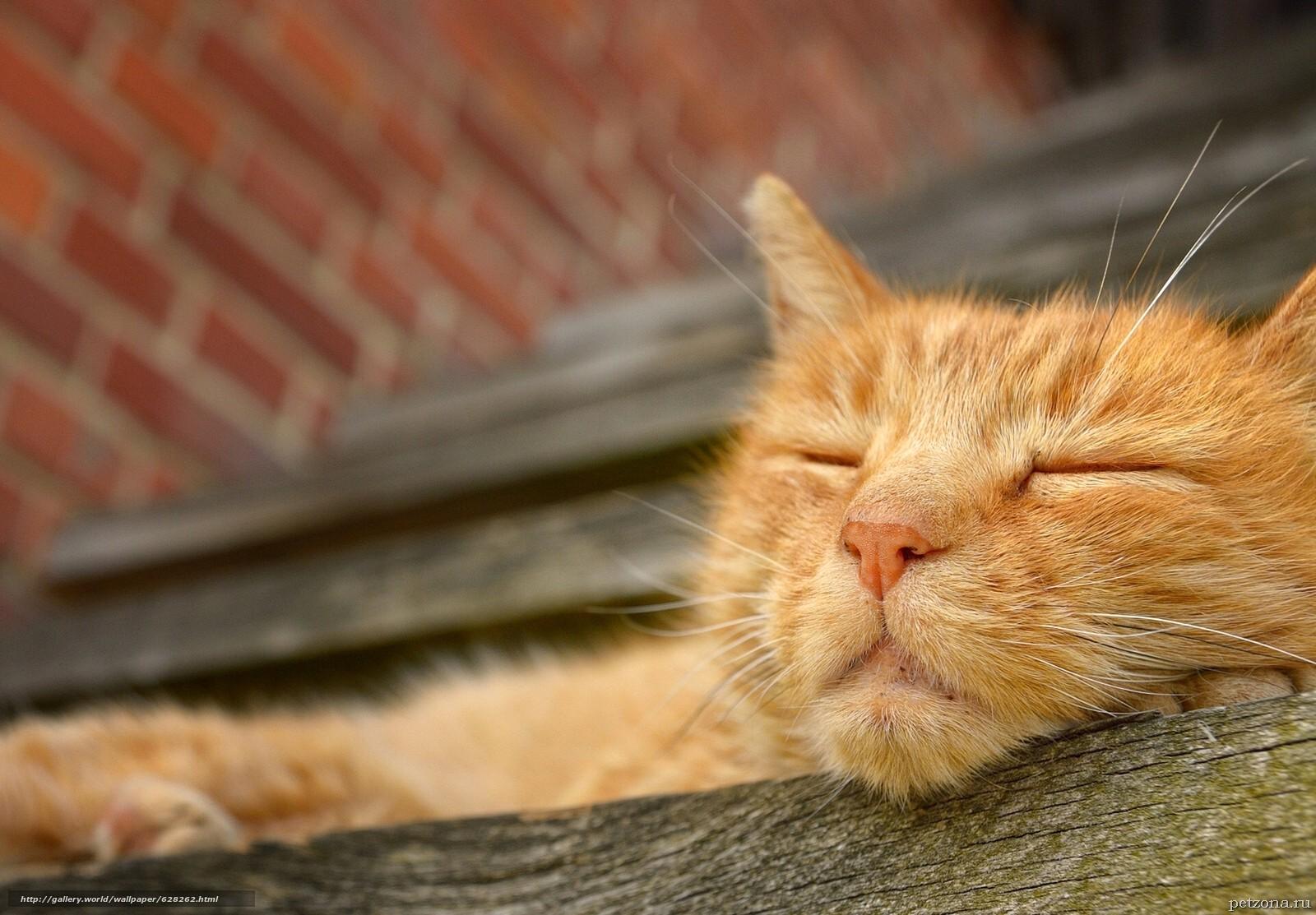 Дневник кота Плинтуса. Часть 1 (1.1)