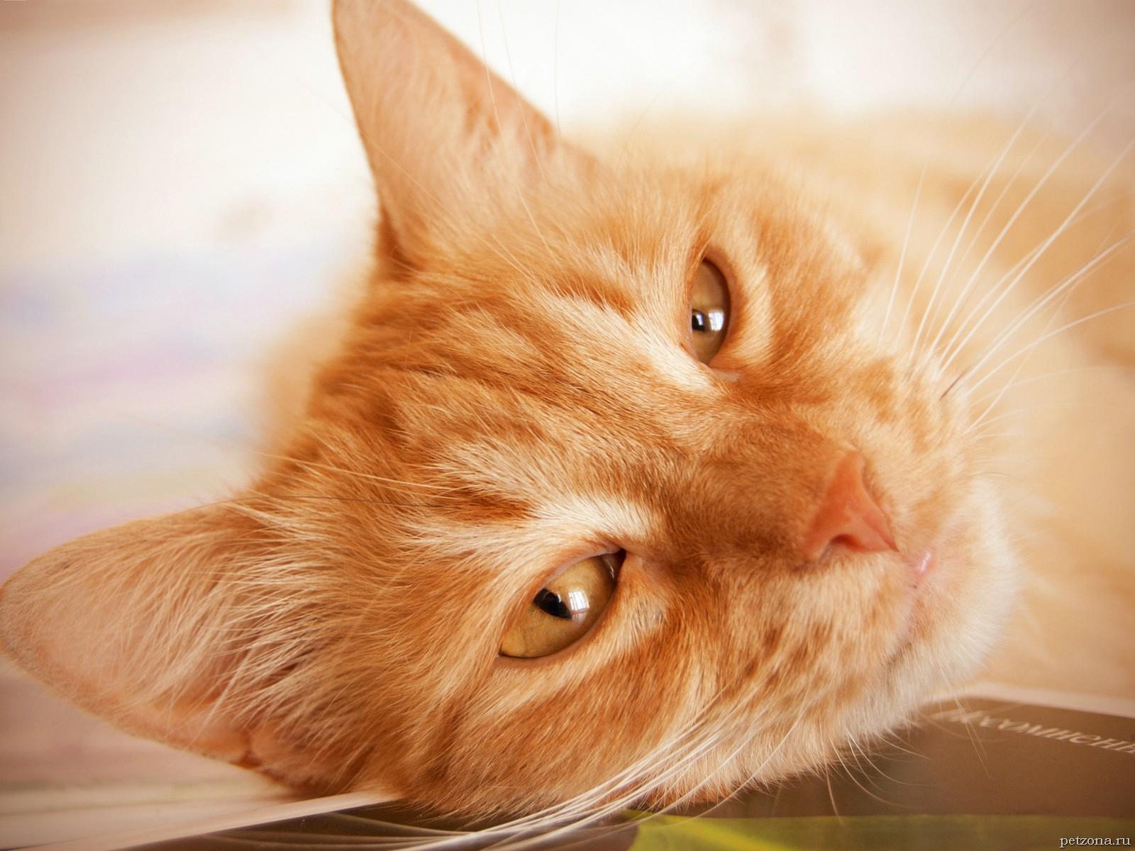 Дневник кота Плинтуса. Часть 1 (1.2)