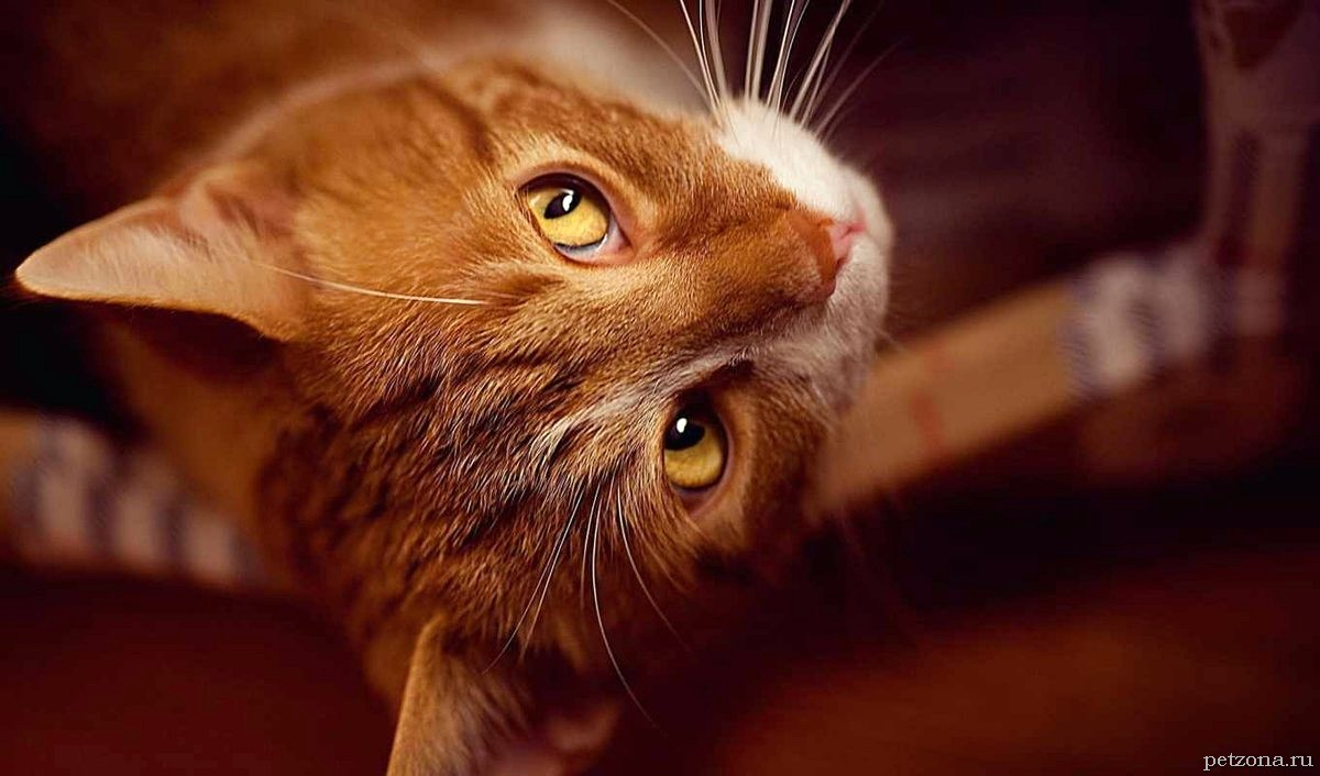Дневник кота Плинтуса. Часть 2 (2.1)