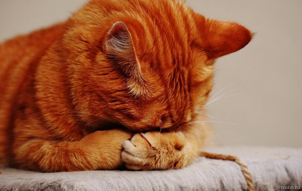 Дневник кота Плинтуса. Часть 2 (2.2)