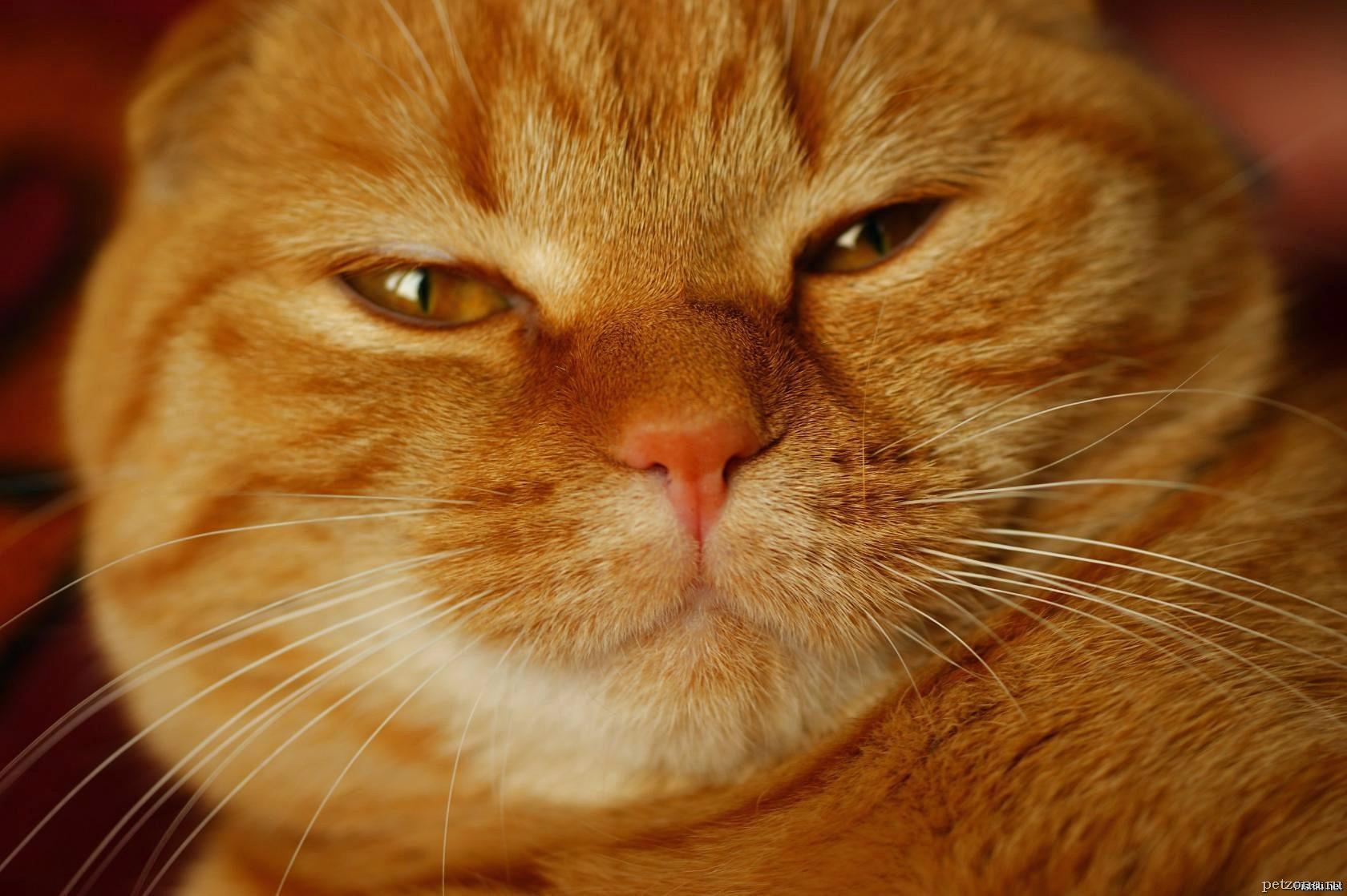 Дневник кота Плинтуса. Часть 3 (3.1)
