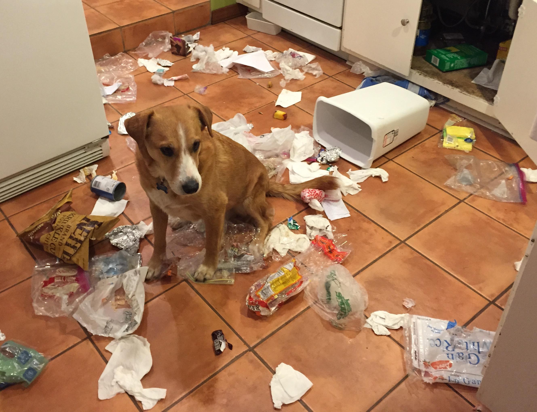 Как воспитать собаку без рукоприкладства