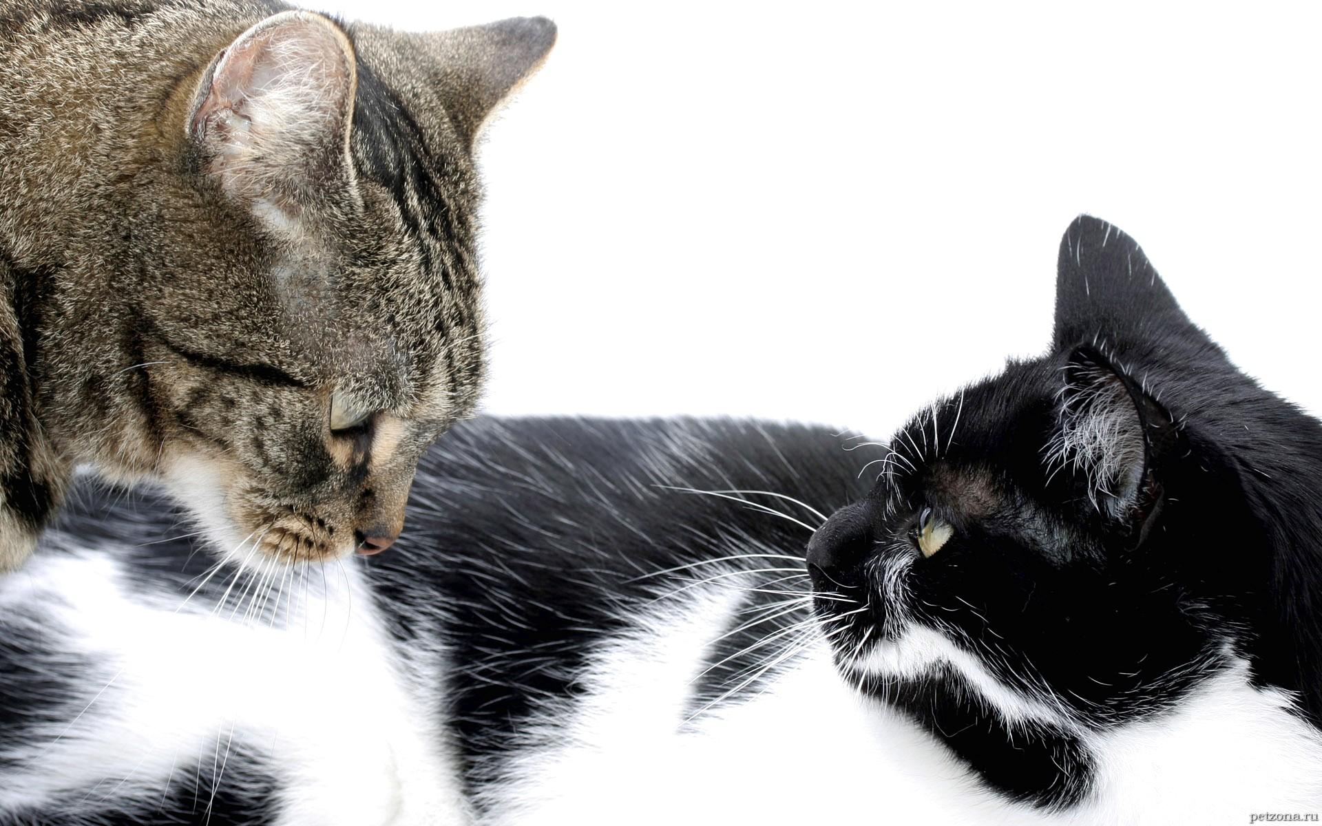 Кошки и секс. Часть 1