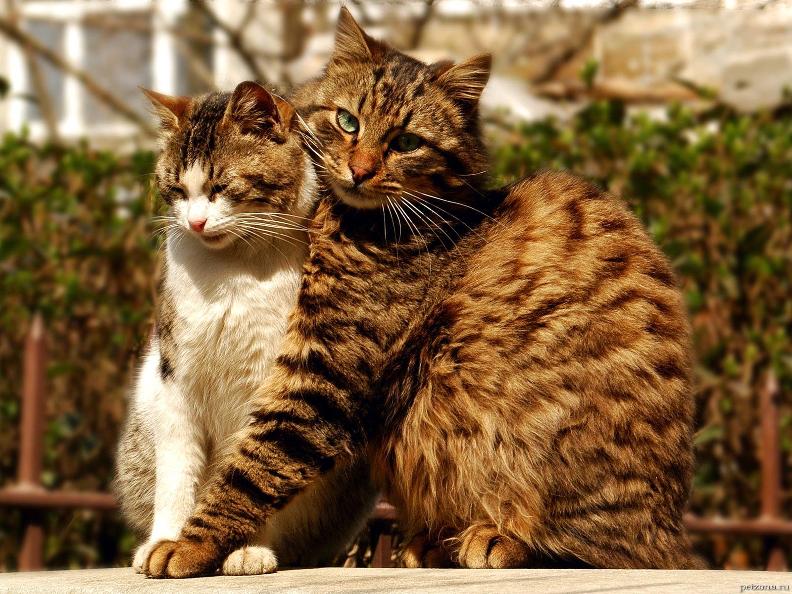 Кошки и секс. Часть 2