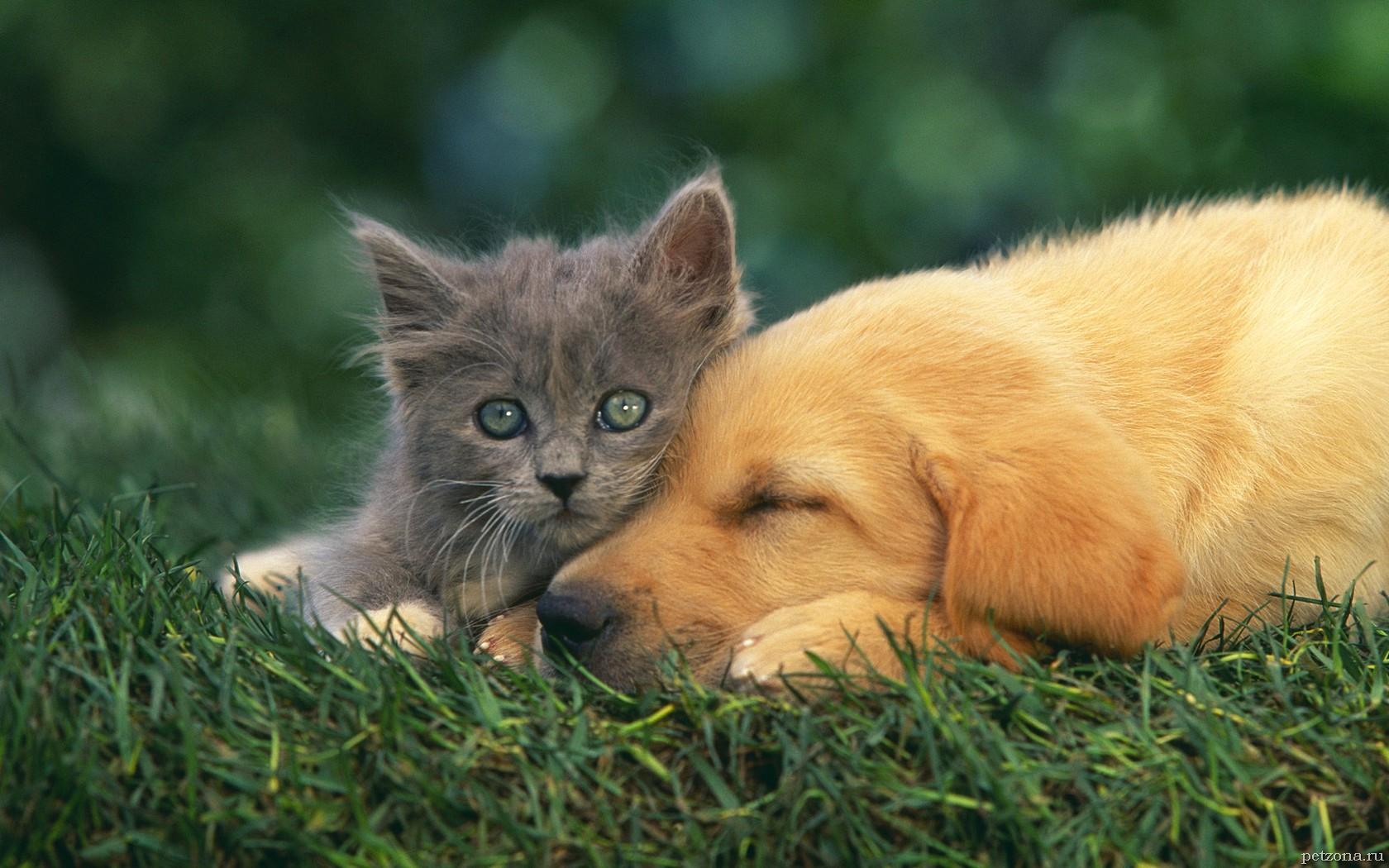 Особенности сожительства кошки и собаки