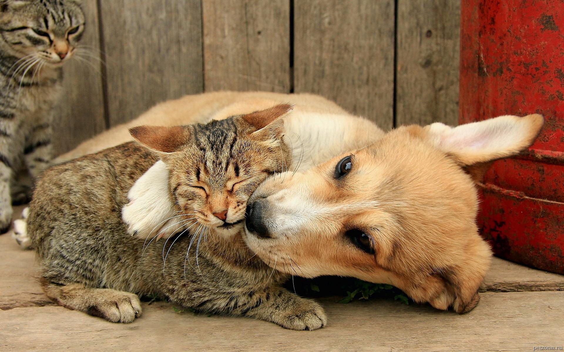 Картинки кошка и собака