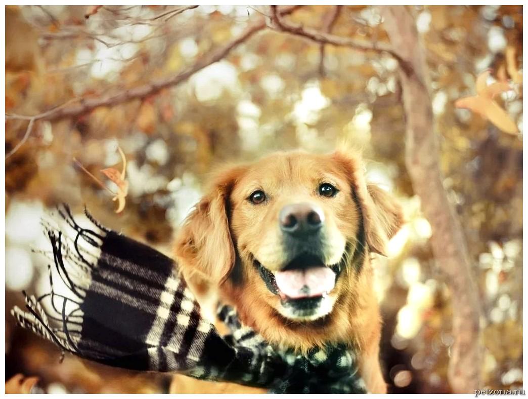 Переохлаждение и обморожение в зимний период у домашних животных