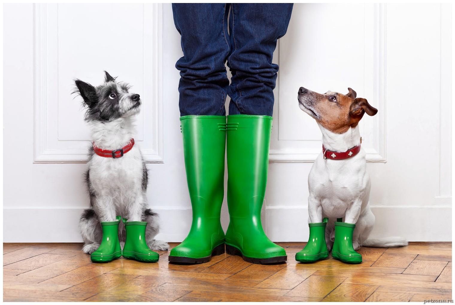 Реагенты и отравления у собак: реакция организма и первая помощь