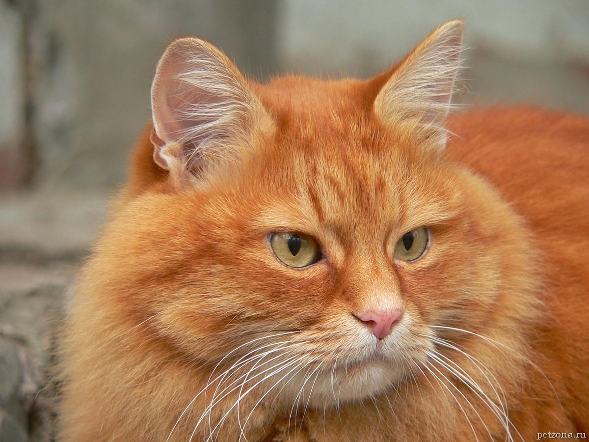 Дневник кота Плинтуса. Часть 3 (3.3)