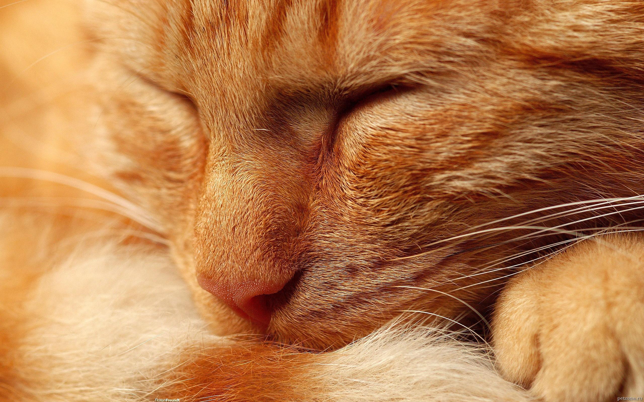 Дневник кота Плинтуса. Часть 4 (4.1)