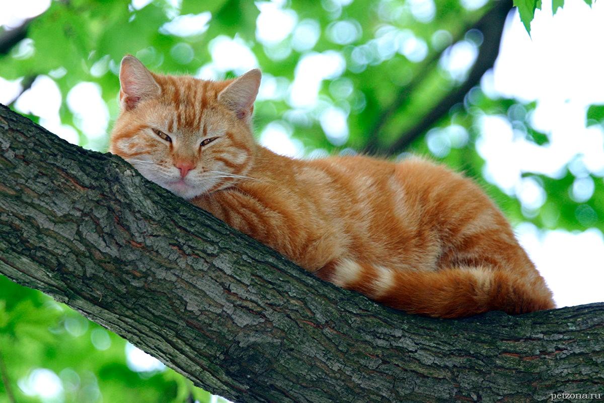 Дневник кота Плинтуса. Часть 4 (4.2)