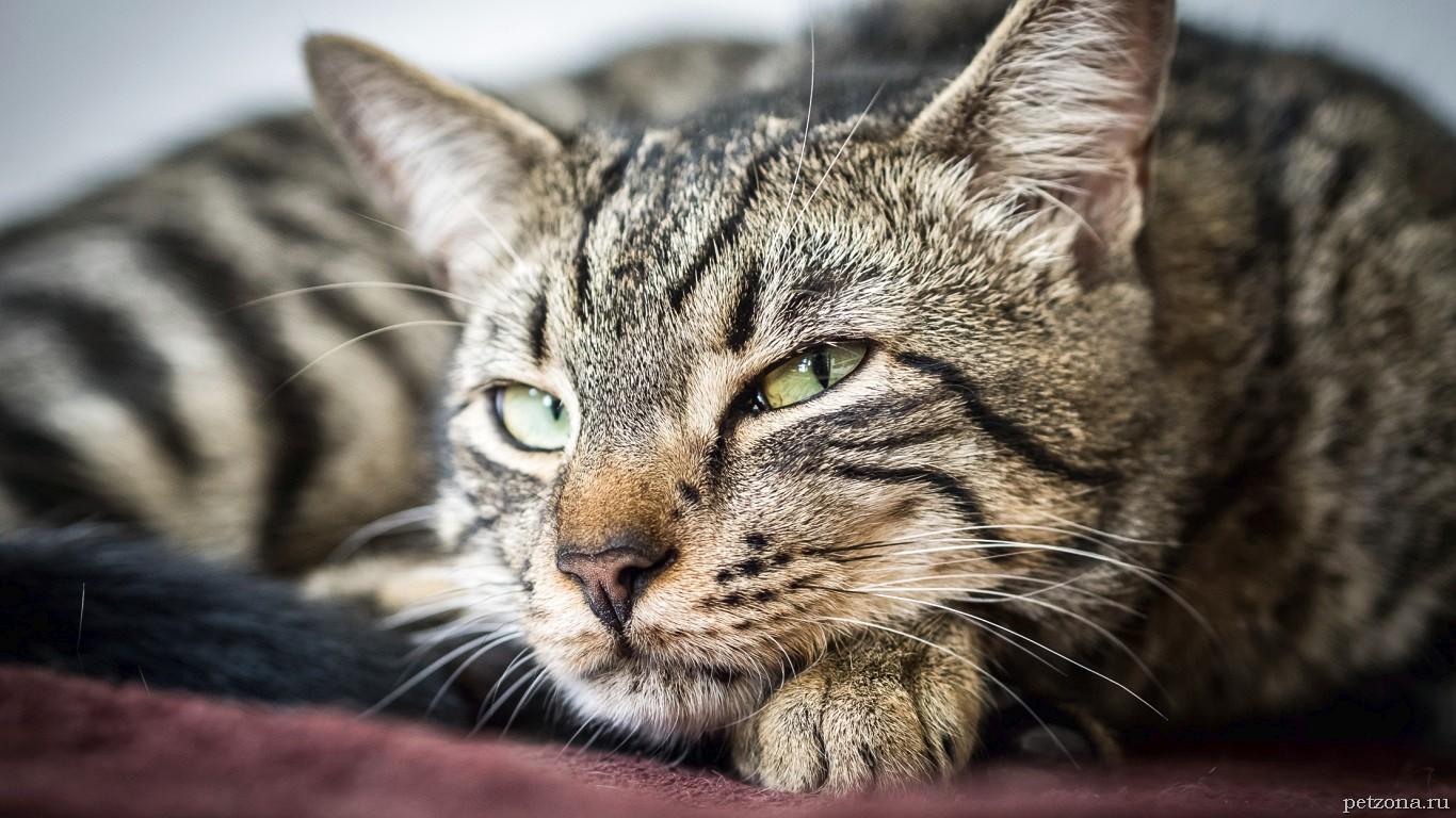 Дневник собаки и дневник кота - две большие разницы))
