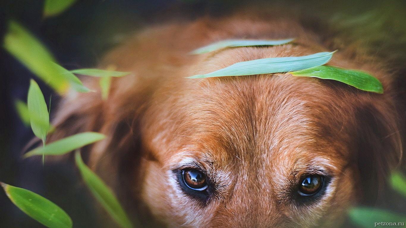 Конъюнктивит у собак. Как и чем лечить?