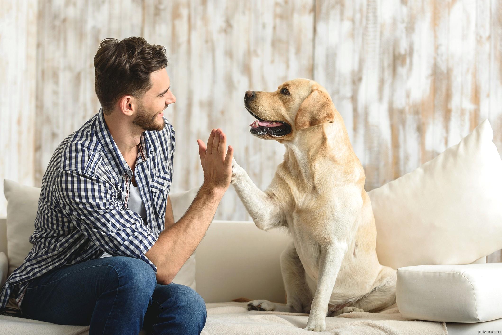 Окситоцин - сущность любви собаки и человека