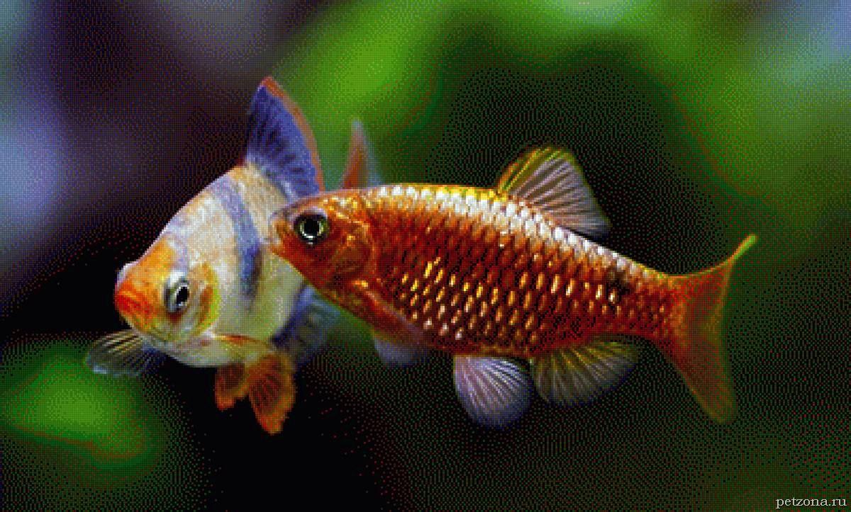 Первый аквариум. Нюансы выбора его обитателей.