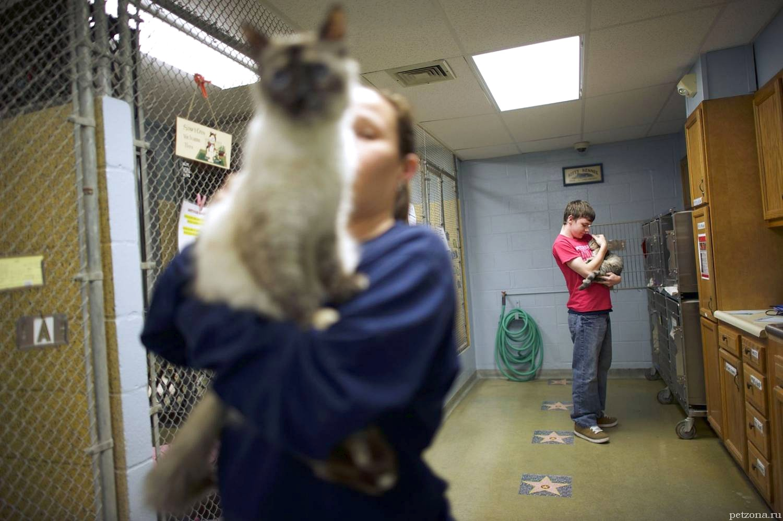 5 причин взять кошку из приюта