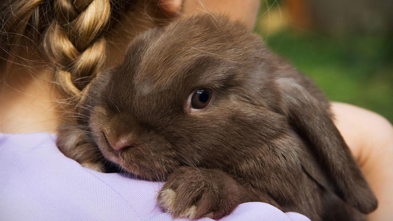 Почему стоит завести карликового кролика