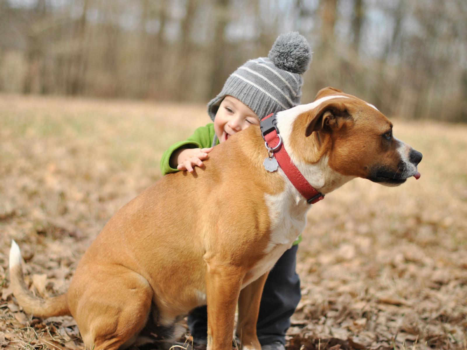 Учим детей правильно вести себя с собакой