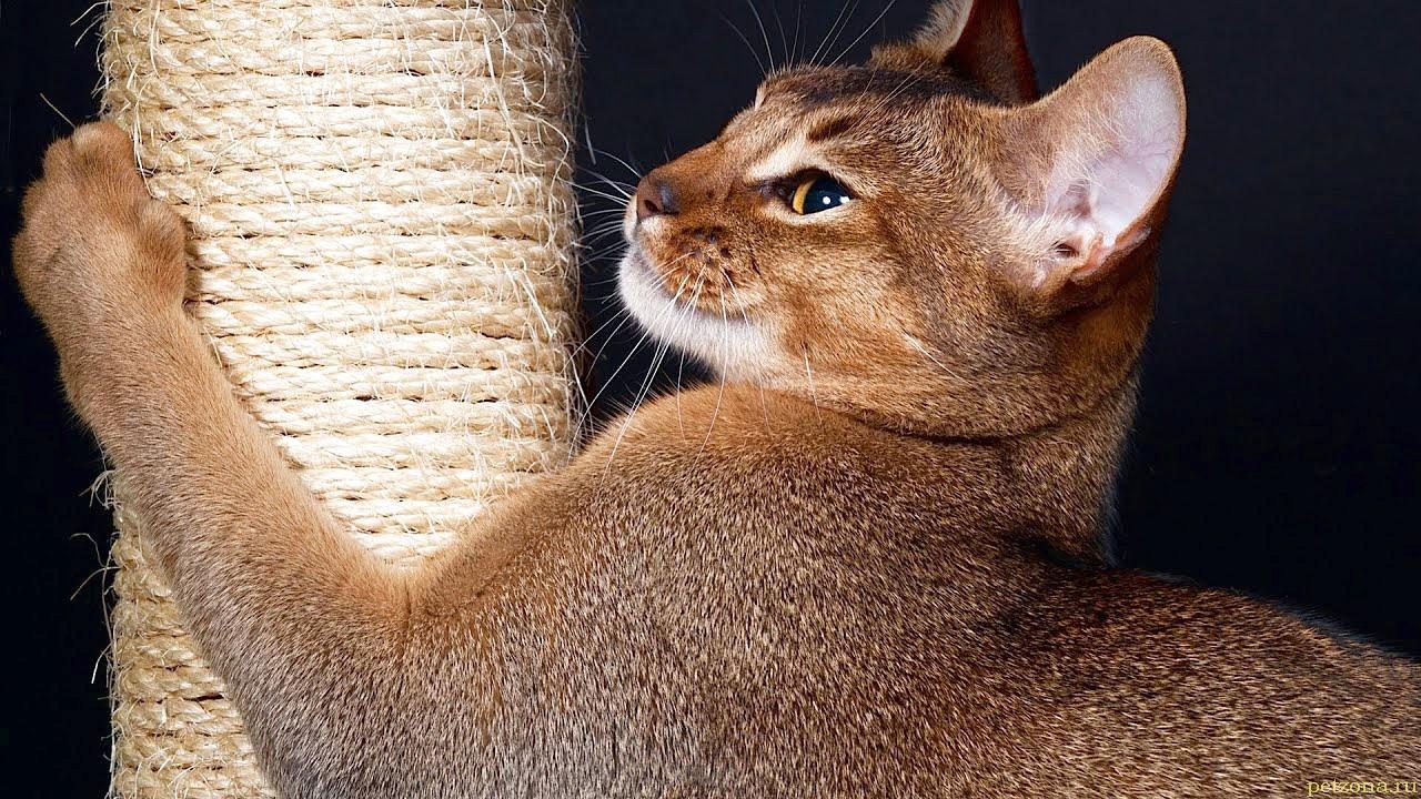 Как отучить кошку от царапания мебели?