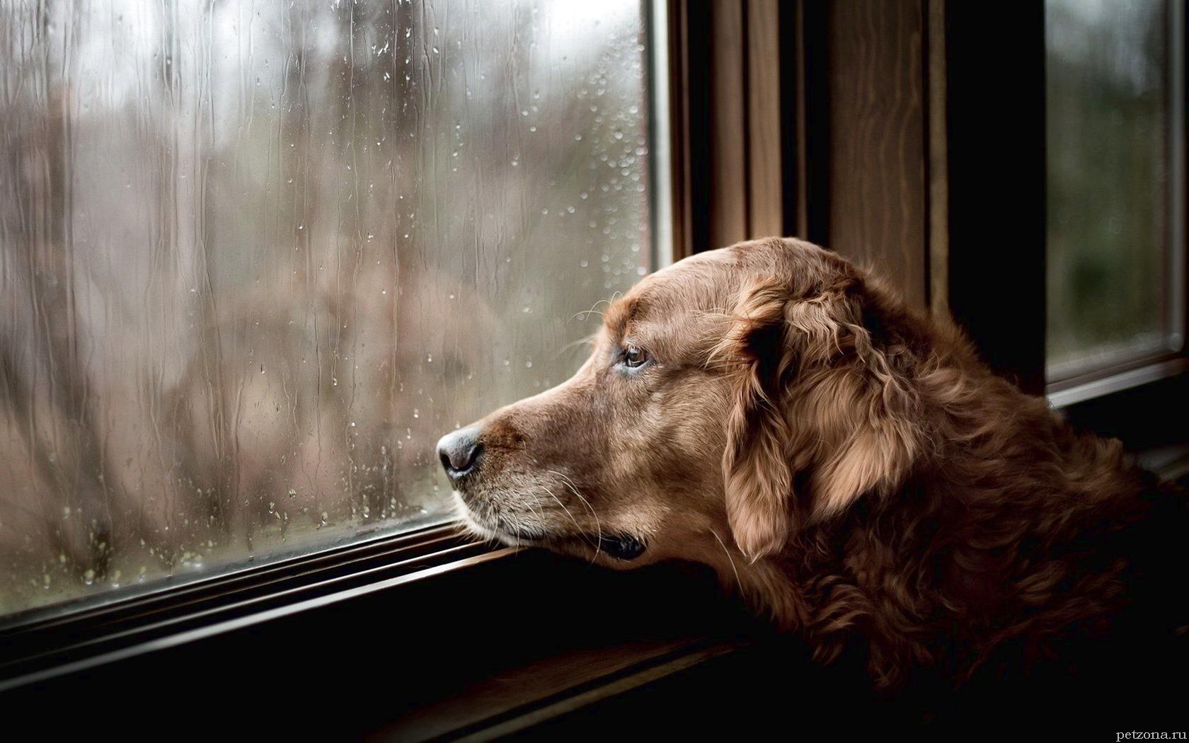 Как понять, что собака болеет